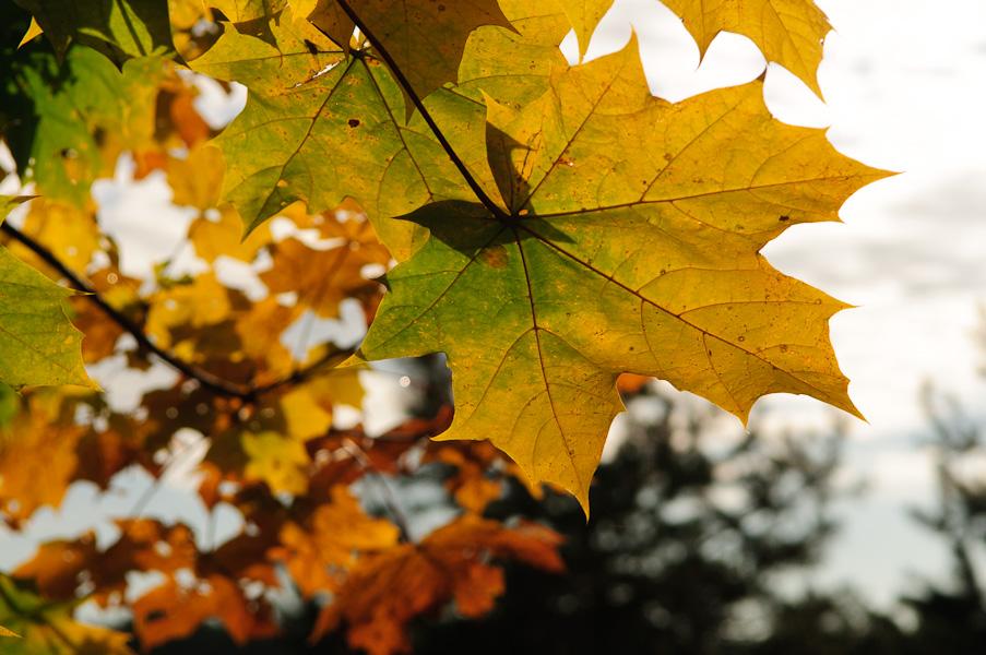 KW44 - Herbstfarben