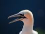 Tierische Begegnungen auf Helgoland 2011