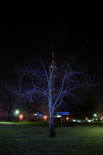 Angeblitzter Baum :-)